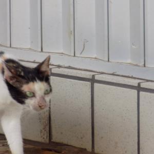 第220匹 沖縄で出会った猫