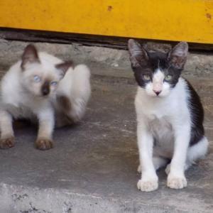 第223匹 沖縄で出会った猫
