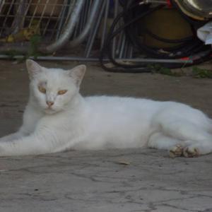 第224匹 沖縄で出会った猫