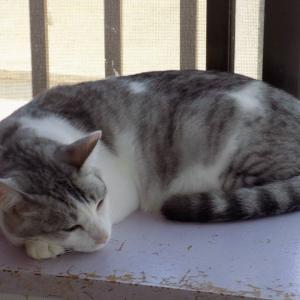 第225匹 沖縄で出会った猫