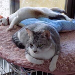 第229匹 沖縄で出会った猫