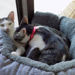 第230匹 沖縄で出会った猫
