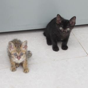 第263匹 カンボジアで出会った猫