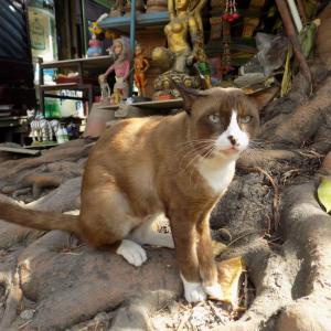 第266匹 タイで出会った猫