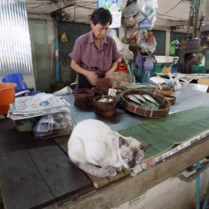 第267匹 タイで出会った猫