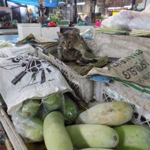 第268匹 タイで出会った猫