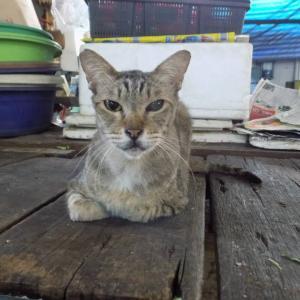 第269匹 タイで出会った猫