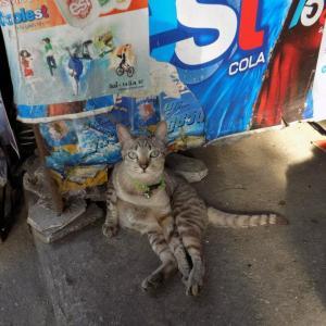 第270匹 タイで出会った猫