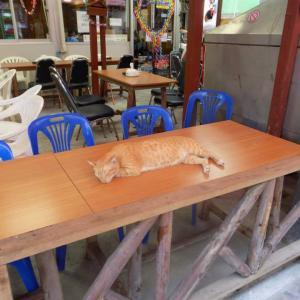 第271匹 タイで出会った猫