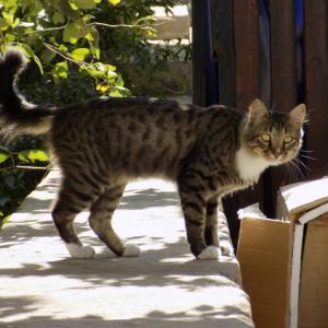 第292匹 アゼルバイジャンで出会った猫