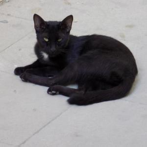 第293匹 アゼルバイジャンで出会った猫