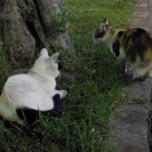 第294匹 アゼルバイジャンで出会った猫