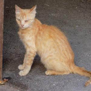 第296匹 ジョージアで出会った猫