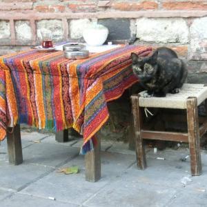 第297匹 トルコで出会った猫