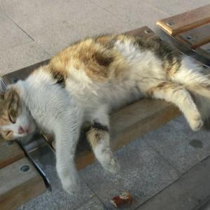 第298匹 トルコで出会った猫