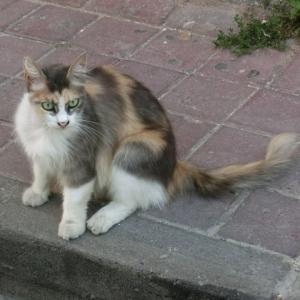 第299匹 トルコで出会った猫