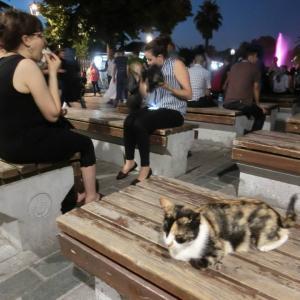 第300匹 トルコで出会った猫