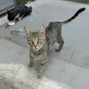 第302匹 トルコで出会った猫