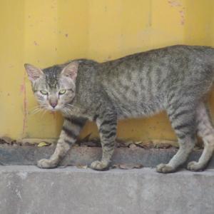 第303匹 カンボジアで出会った猫