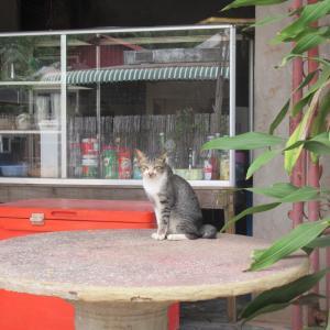 第304匹 カンボジアで出会った猫