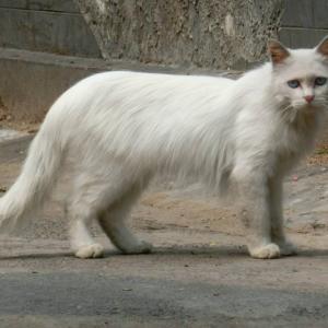 第308匹 中国で出会った猫