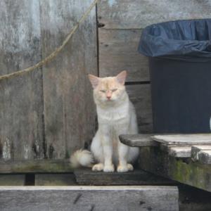 第325匹 ブルネイで出会った猫