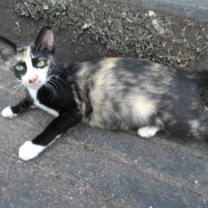 第326匹 ブルネイで出会った猫