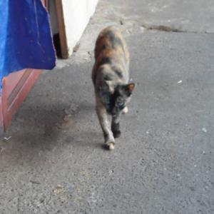 第327匹 ブルネイで出会った猫