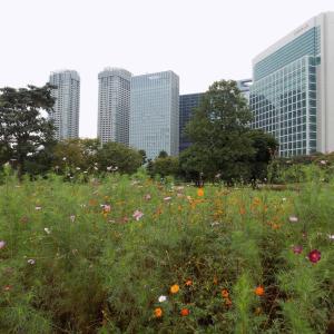都民の日 東京都立浜離宮恩賜庭園ごゆるり散策