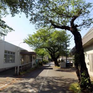 東村山 ハンセン病患者の収容施設だった多摩全生園