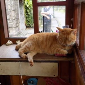 台湾の猫村:猴硐(ホウトン)ごゆるり散策