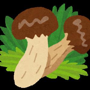【松茸】マツタケが絶滅危惧種に 「森を適度に利用する必要がある」