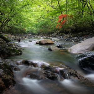 森林浴 2020.5.24