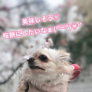 桜が咲いてた頃