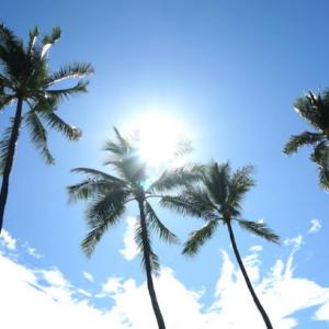 【ハワイ留学】IIE Hawaiiで選択できるコースやオススメの滞在方法について解説!