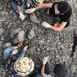福井旅行DAY2★化石発掘体験とディノパーク
