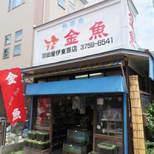 金魚 羽田屋伊藤商店 (大田区矢口) レトロな金魚屋さん