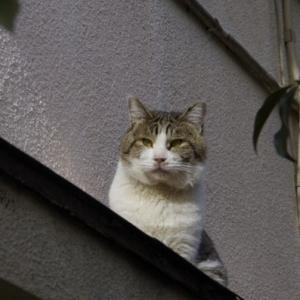 猫の居場所   2013年