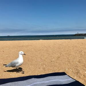 【ビーチレポ】Williamstown Beach