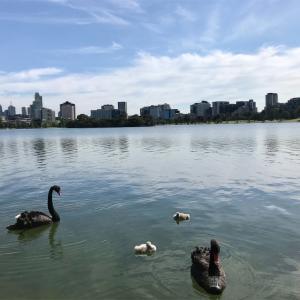 【公園レポ】Albert Park 湖とビルの融合が美しすぎる