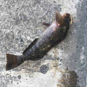 初心者にオススメのチョイ投げ釣り 対象魚・タックル・ポイント・注意点など