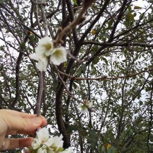 えっ 👀⁉️  桜の花🌸が咲いてるー