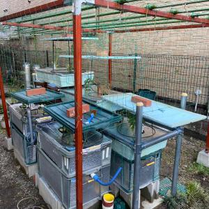 今年の水耕栽培定植完了