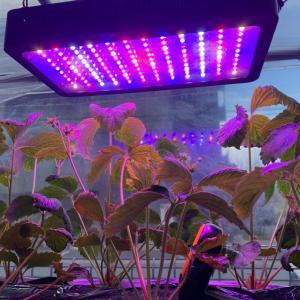 強力LEDの照度測定と設置