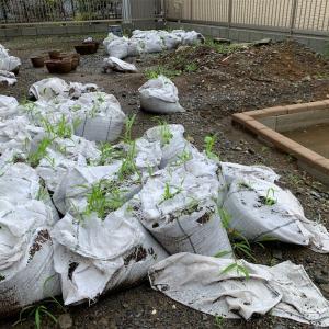 外構費用不足で雑草だらけの庭になって大後悔