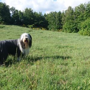 清涼な高原で、犬の鼻歌が聞こえるような気がした