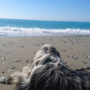 砂浜に穴を掘る犬・・