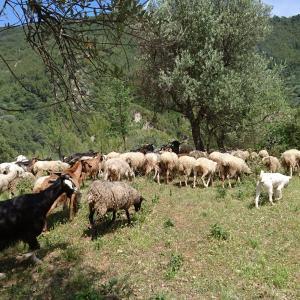 現役牧羊犬のお友達ワンコたち