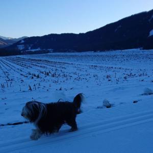 雪国での朝のお散歩
