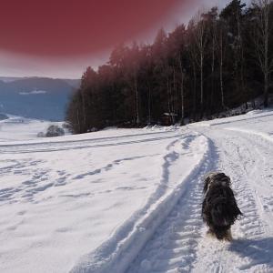 雪も大好きです